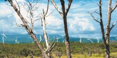 Fotografías capturadas al son del viento