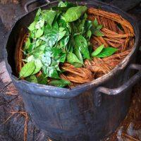 Es una bebida hecha de la cocción de la planta Banisteriopsis caapi, que tiene un significado espiritual para tribus indígenas de Sudamérica. Foto:vía Wikipedia