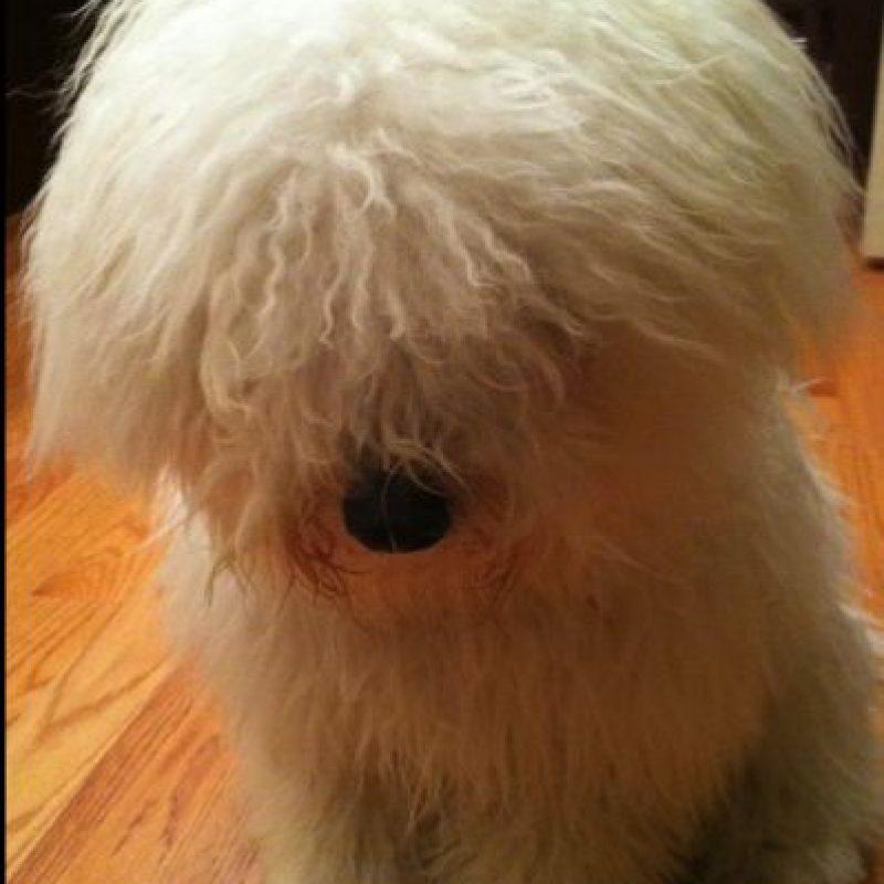 """Estas son las fotos de Facebook que Beast, la mascota de Mark Zuckerberg """"publica"""" en Facebook. Foto:facebook.com/beast.the.dog/"""