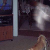 Miren esta luz blanca sobre el perro. Foto:Vía Reddit