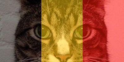 Redes sociales responden con gatitos a una amenaza de atentado terrorista de ISIS
