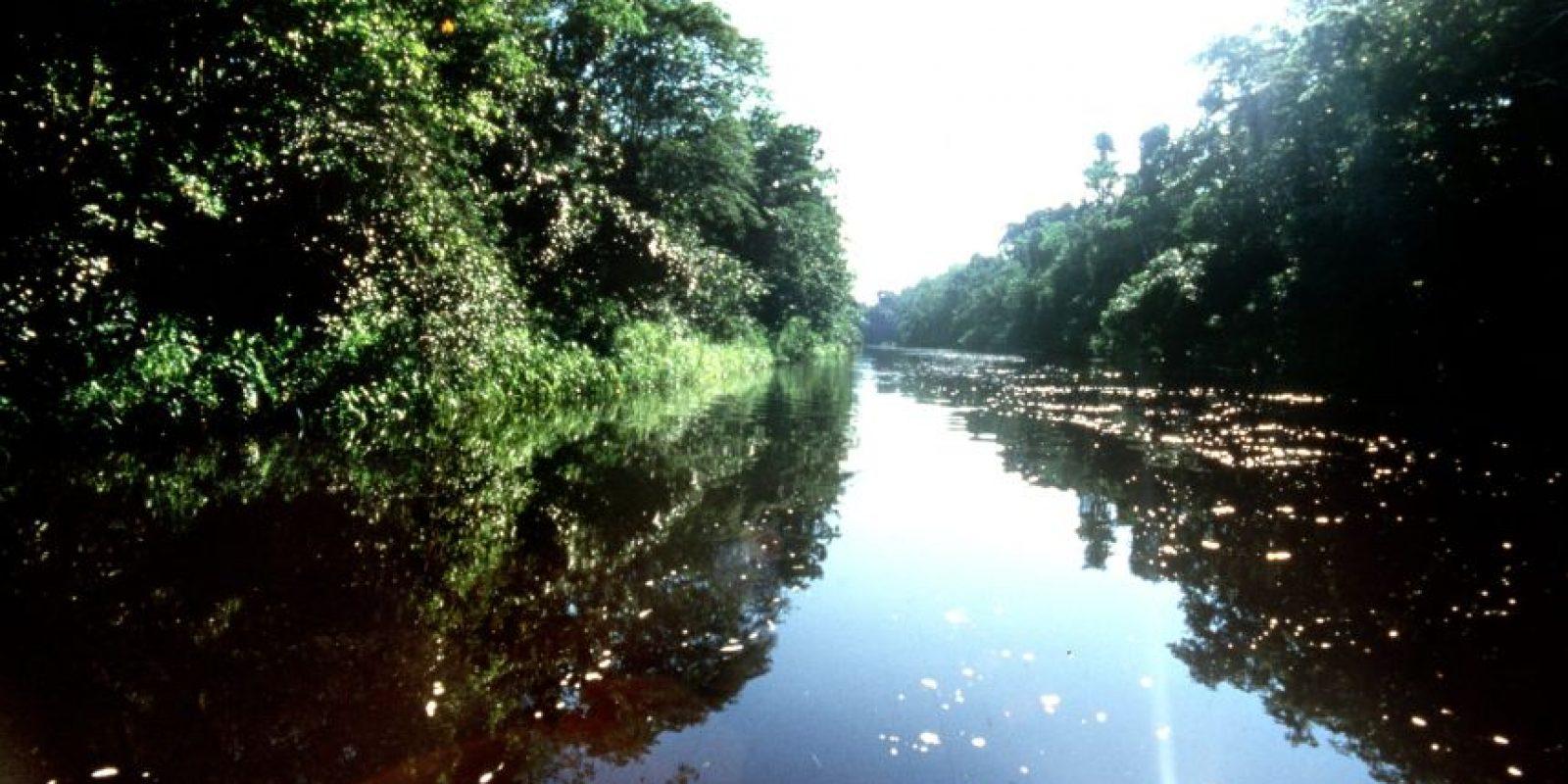 Ocho países protegen hoy la amazonía. Foto:EFE