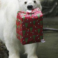 Esto, en caso de que no se generen medidas para garantizar su conservación Foto:Getty Images