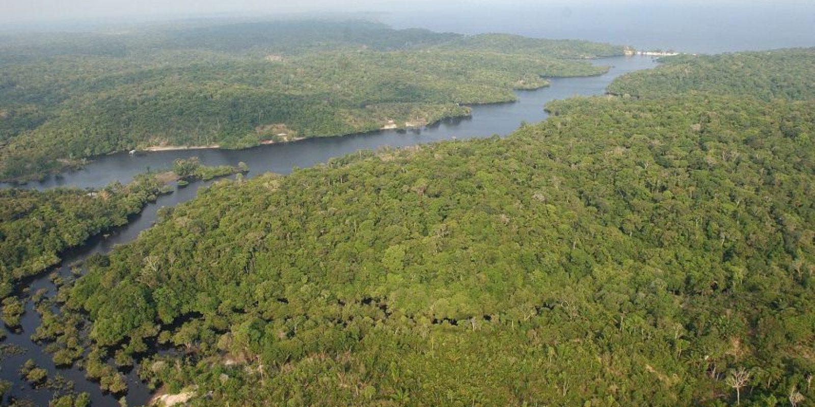 La amazonía juega un rol fundamental en la lucha contra el cambio climático. Foto:EFE