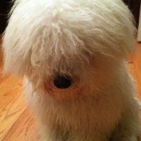 Siempre ha lucido adorable. Foto:facebook.com/beast.the.dog