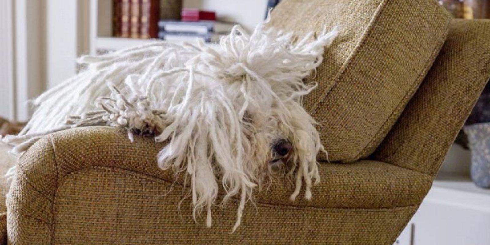 Su cabello es enorme. Foto:facebook.com/beast.the.dog