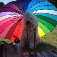 En sus ratos libres está al aire libre cubierto del sol. Foto:facebook.com/beast.the.dog