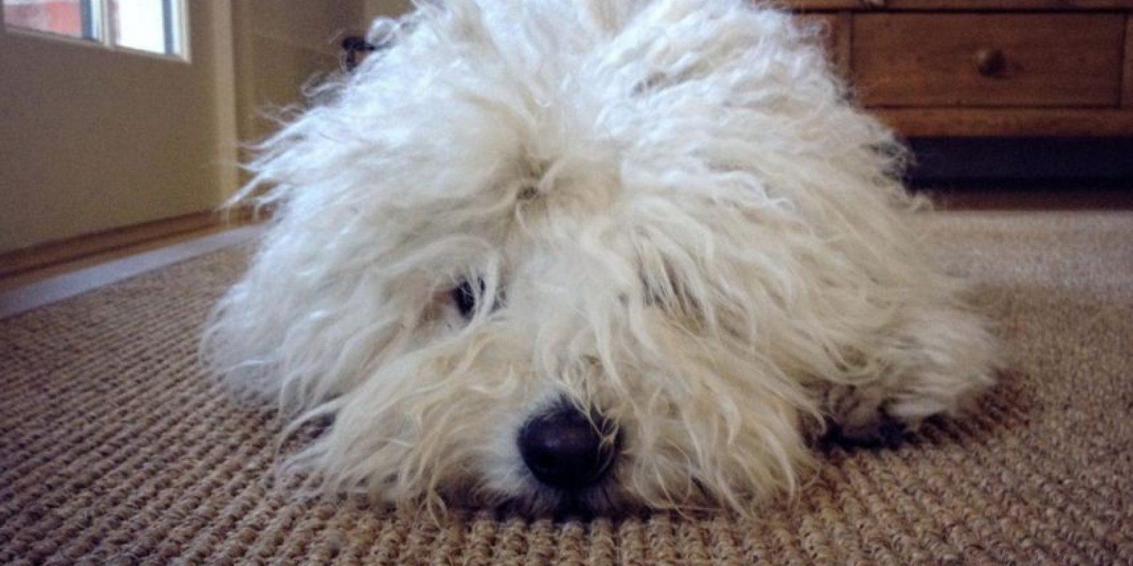Con cara de sueño. Foto:facebook.com/beast.the.dog