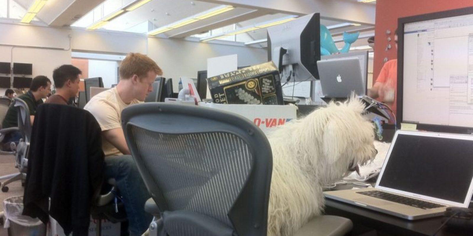 No le desagrada ir a trabajar a Facebook. Foto:facebook.com/beast.the.dog