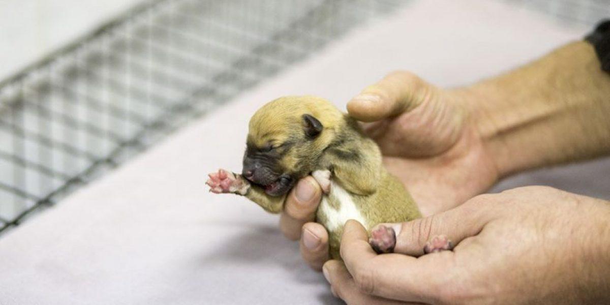 Pasajeros del Metro ayudan a perrita a tener a sus 9 cachorros