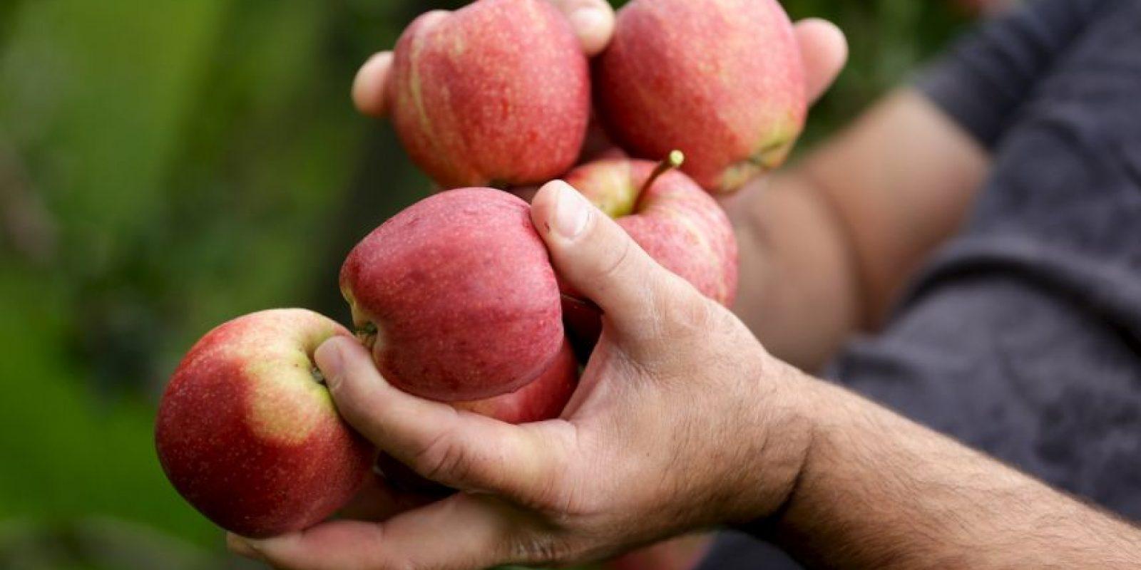 4. El precio de un kilogramo de manzanas (2.20 libras) Foto:Getty Images