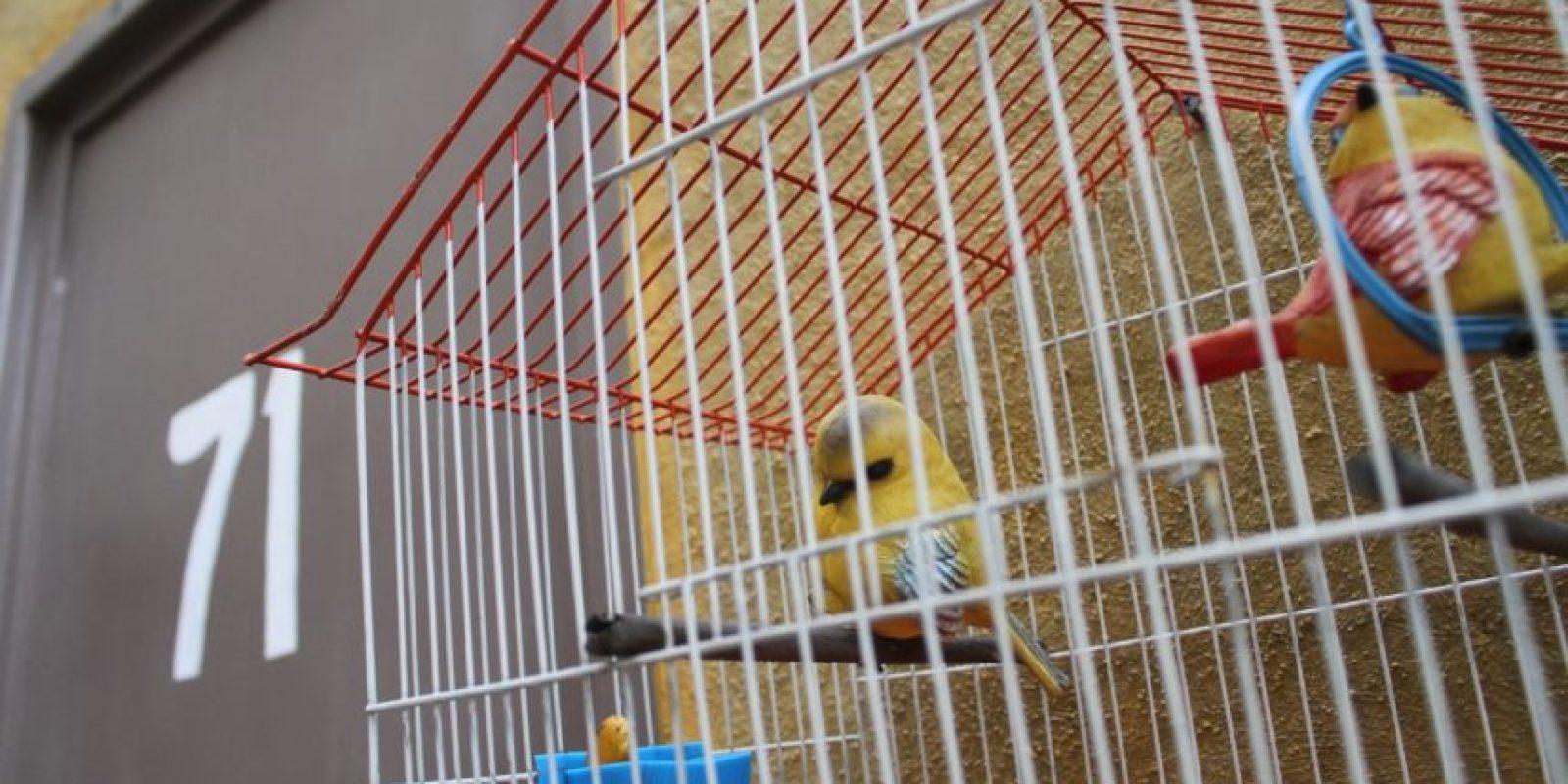 """Las aves de """"la bruja del 71"""" afuera de su departamento. Foto:Nicolás Corte"""