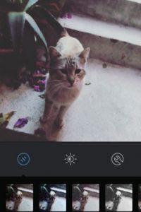 Gingham Foto:Instagram