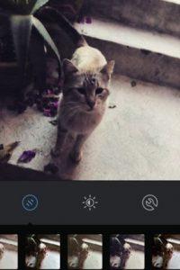 Crema Foto:Instagram