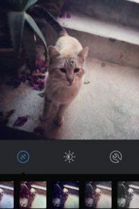 Sierra Foto:Instagram