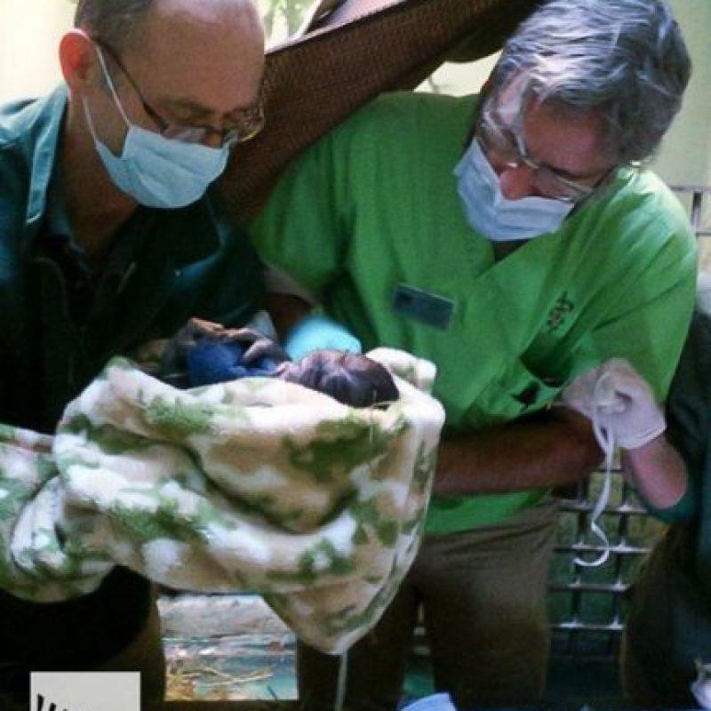 La bebé gorila nació hace cuatro días. Foto:Vía Instagram.com/woodlandparkzoo
