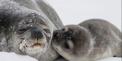"""""""El cambio climático es como un 'multiplicador de amenazas', ya que agrava los problemas existentes"""", Amanda McKenzie Foto:Flickr.com"""