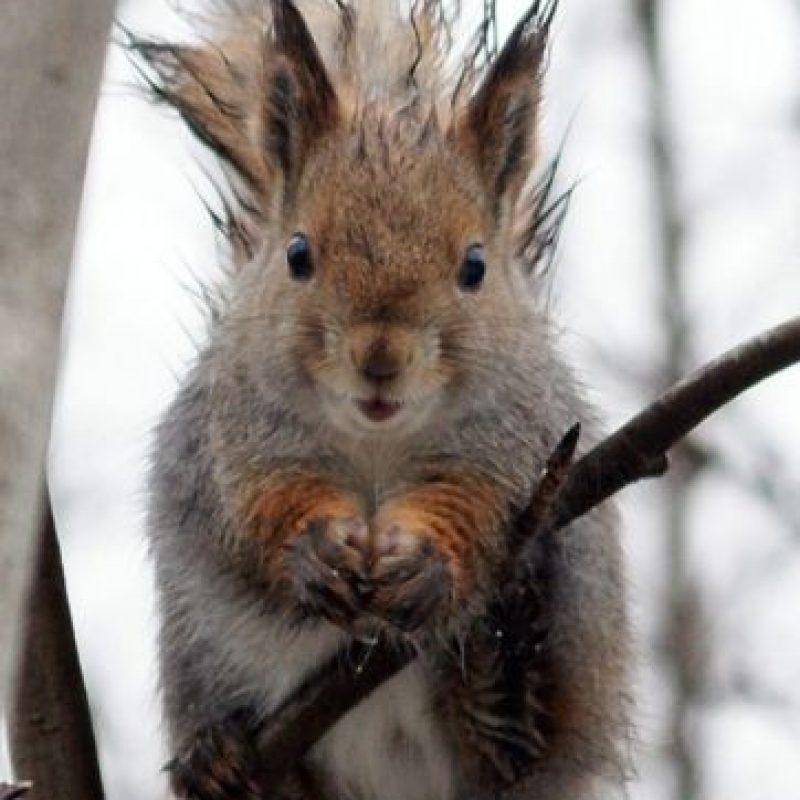 Las ardillas suelen vivir en bosques caducifolios o de coníferas. No obstante, algunas especies se encuentran adaptadas a vivir en hábitats que van desde la taiga al desierto. Foto:Pinterest