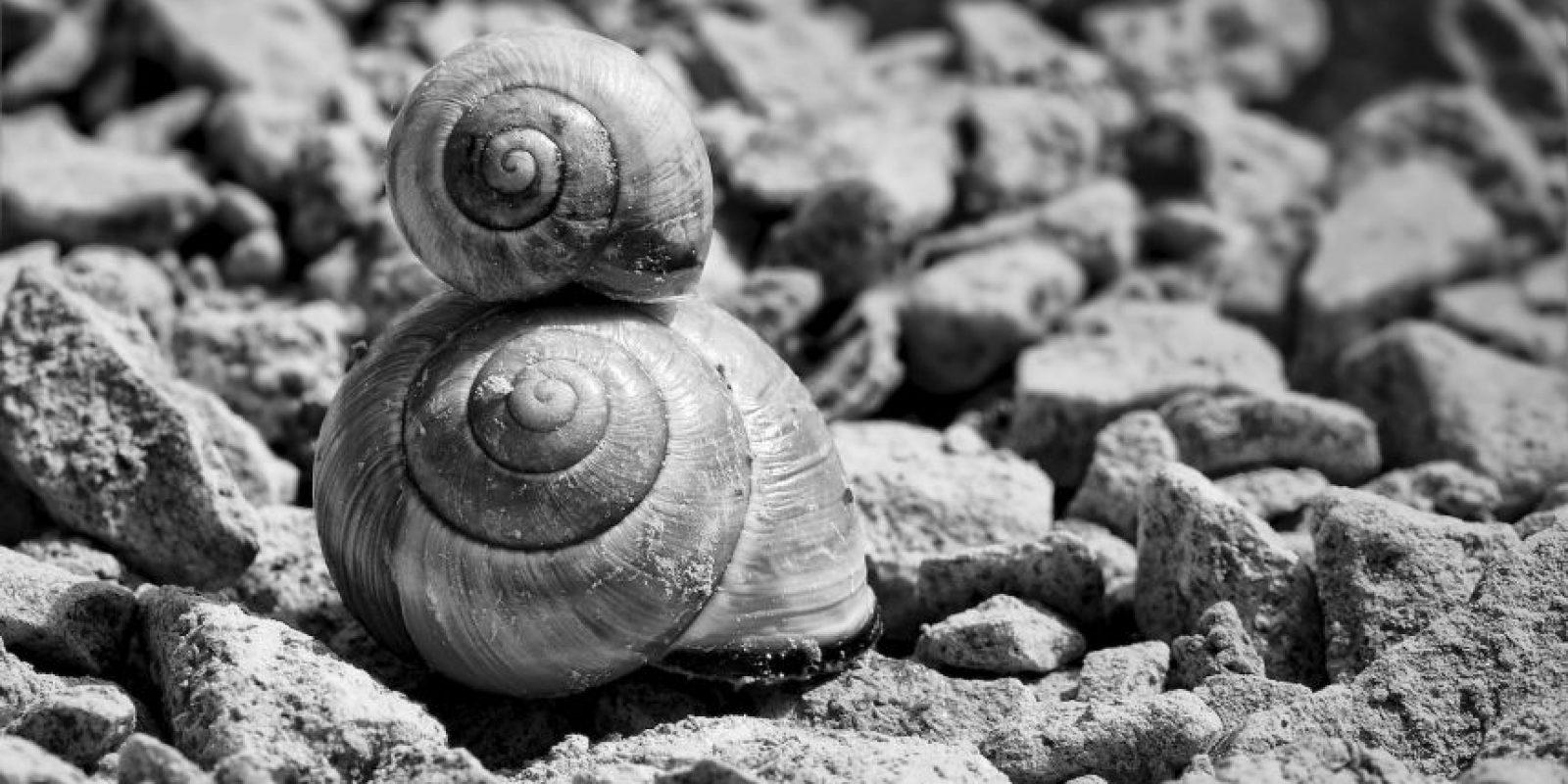 La velocidad de los caracoles ronda los 1.3-2 centímetros por segundo. Si se movieran sin parar, tardarían más de una semana en completar un kilómetro. Foto:Pixabay