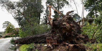 Talar árboles sin una eficiente reforestación resulta en un serio daño al ecosistema. Foto:Getty Images