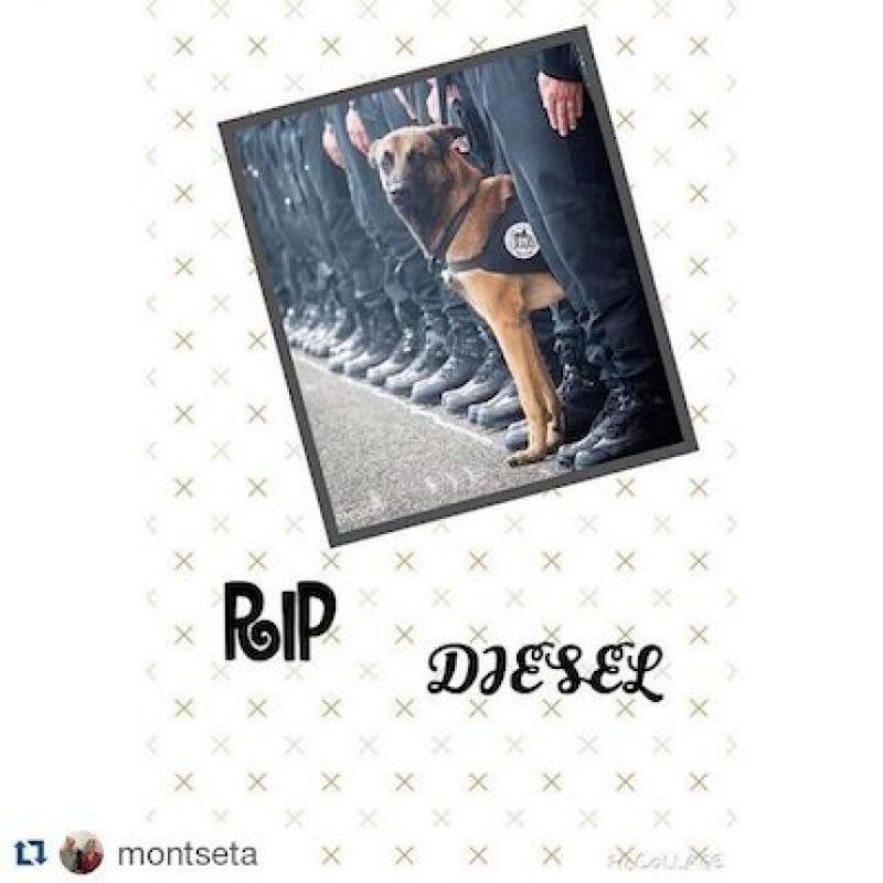 Foto: Instagram.com/sashalabebe