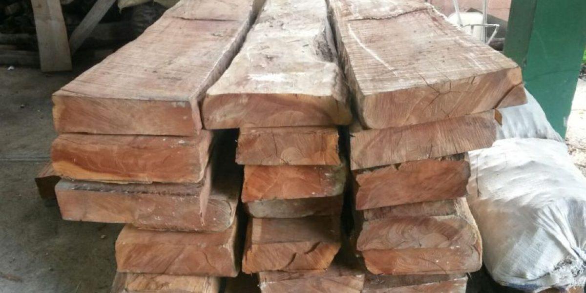 Medio Ambiente incauta madera cortada ilegalmente en Barahona y Dajabón