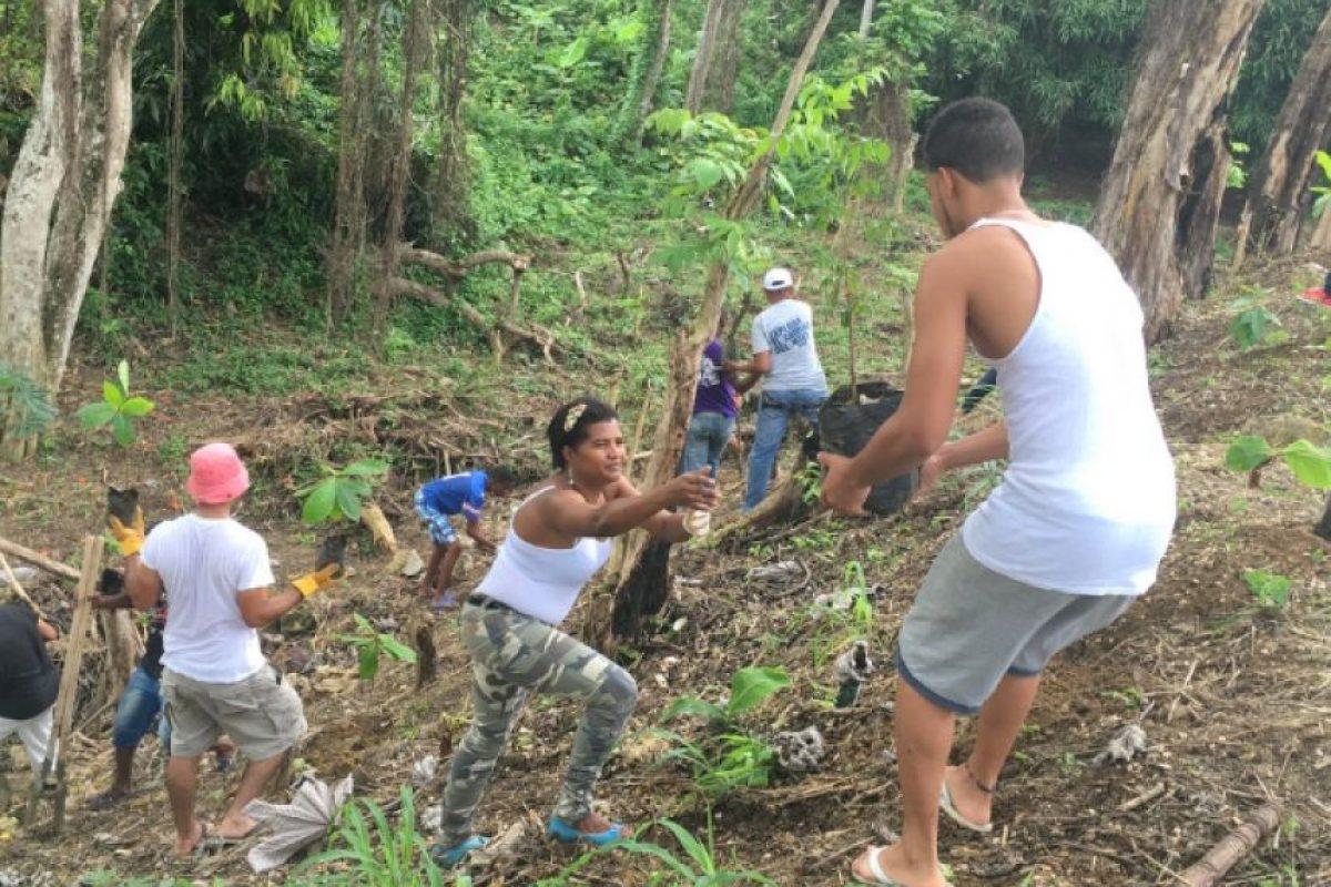 La Junta de Vecinos del Residencial Alta Vista, en Los Alcarrizos durante la reforestación