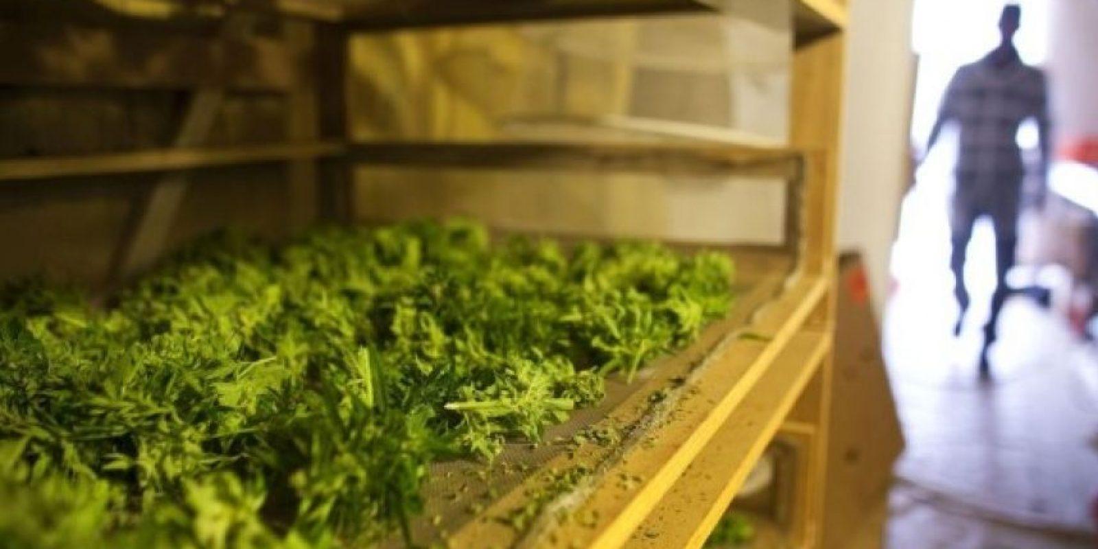 Según la Coalición Contra el Abuso de Drogas, el precio promedio por un gramo de marihuana es de nueve dólares con 18 centavos. Foto:Getty Images