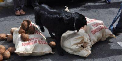 DNCD incauta 36 paquetes de droga en contenedor cargado de cocos iba a España