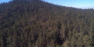 Dominguez Brito llama a consevar parque de Valle Nuevo