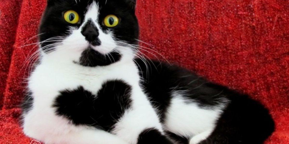 Gato con gran corazón es estrella de Instagram