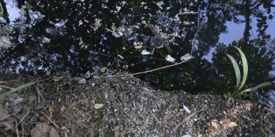 Villa Naco pide control de Medio Ambiente ante foco de contaminación