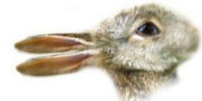 ¿Pato o conejo? Foto:Wikimedia