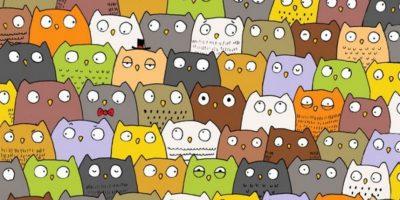 Un gato se esconde entre los búhos. Foto:Vía Twtter.com