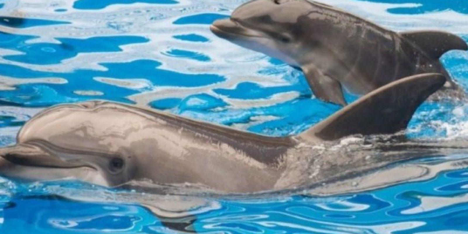 Este delfín llevaba un dispositivo que le permitía disparar flechas que podrían herir a un humano. Foto:Getty Images