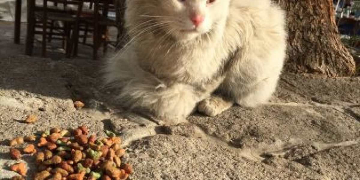 Conozcan al gato migrante que cruzó toda Europa para reunirse con su familia