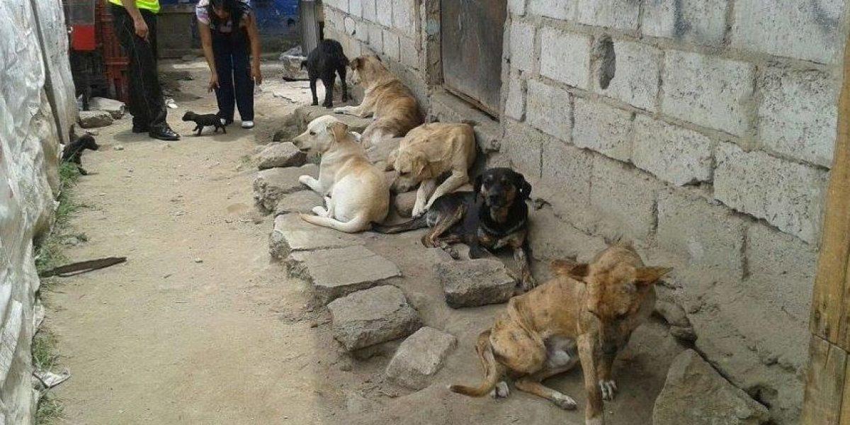 Quito: Perros maltratados son rescatados en La Bota