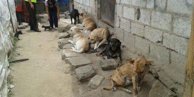 Perros maltratados son rescatados en La Bota Foto:COE Metropolitano