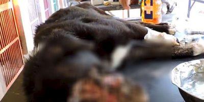 Kalu pudo recuperarse. Foto:vía Facebook/Animal Aid Unlimited