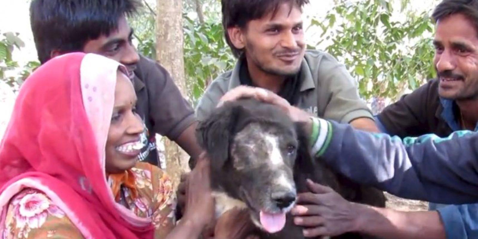 Casi lo sacrifican, pero decidieron salvarlo. Foto:vía Facebook/Animal Aid Unlimited