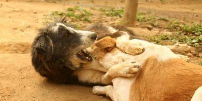 Foto:vía Facebook/Animal Aid Unlimited