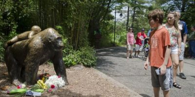 Harambe era un gorila de 17 años que murió luego de que un niño de 3 años se metiera a su jaula por accidente. Foto:AP
