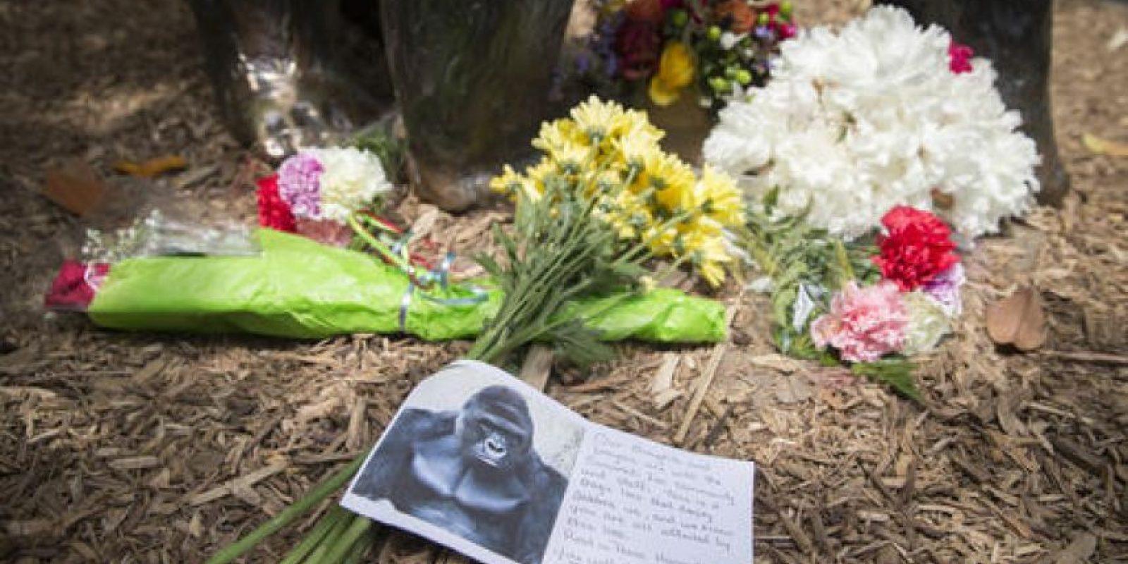 Las autoridades del zoológico intentaron no quitarle la vida, pero el efecto retrasado de los dardos tranquilizante hicieron que se decidiera sacrificarlo. Foto:AP