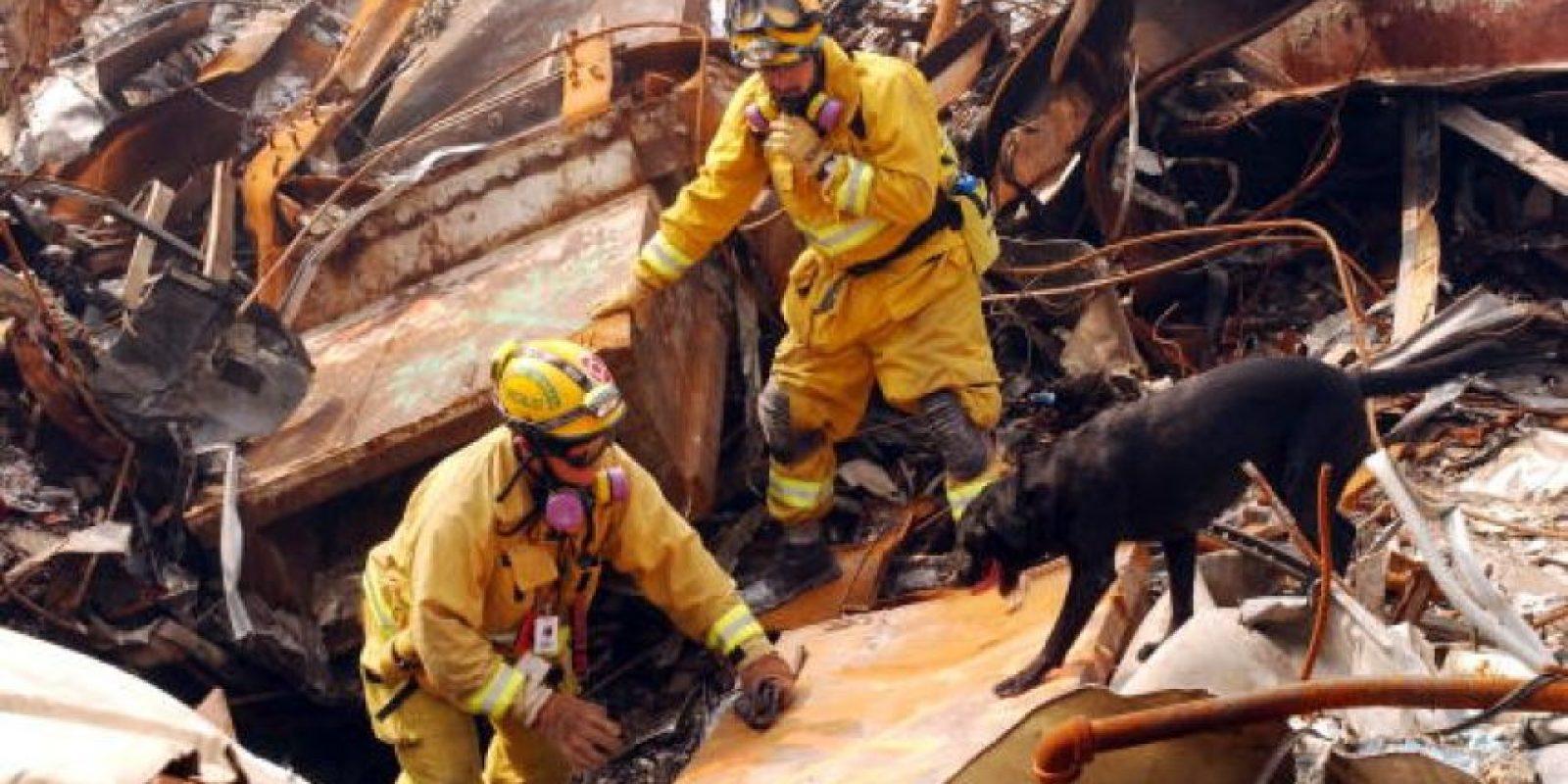 Esto, para que con su olfato pudieran encontrar sobrevivientes Foto:Getty Images