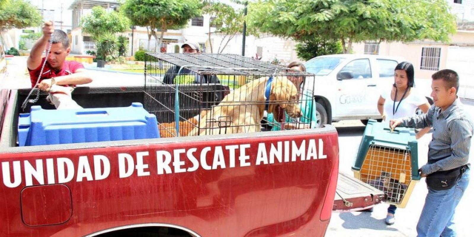 Unidades de rescate animal del Guayas.