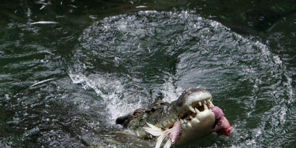 Encuentran el cuerpo del niño de 2 años arrastrado por un caimán