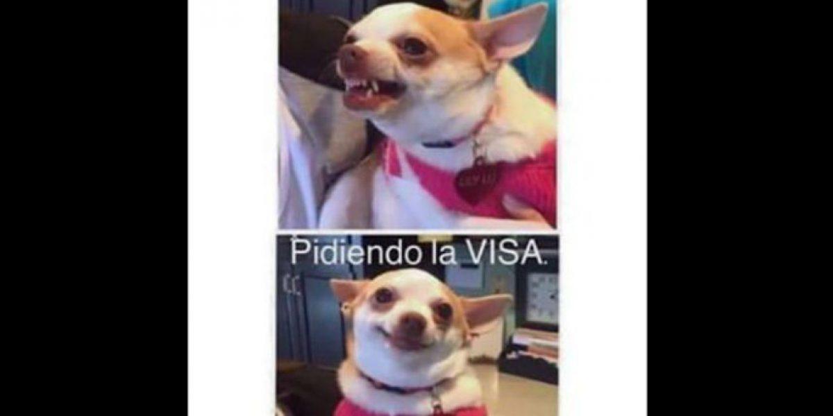 Los memes tras la eliminación de Ecuador