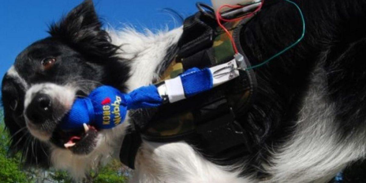 Chaleco permite la comunicación con tu perro