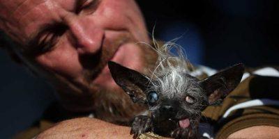 """El ganador fue """"Sweepe Rambo"""", un perro entre chihuahua y crestado chino de 17 años. Foto:Getty Images"""