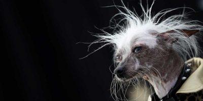"""Y aunque son considerados """"feos""""… Foto:Getty Images"""
